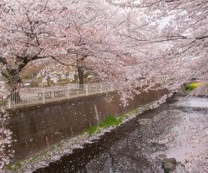 35 mm, sakura, and vintage image