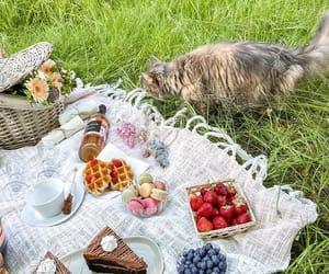 blueberries, cake, and dessert image