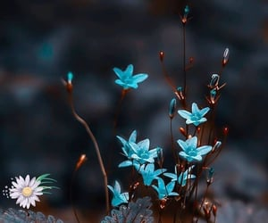 blue flowers and flowers image