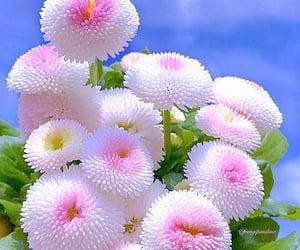 spring flowers image