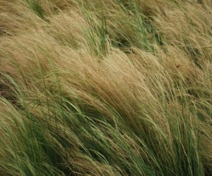 background, calm, and grass image