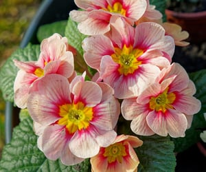 belgium, fleurs, and belgique image