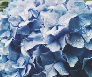 blue, flowers, and hydrangea image