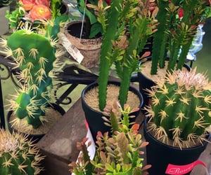 cactos, cactus, and 🌵 image