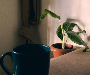 coffe, home, and photography image