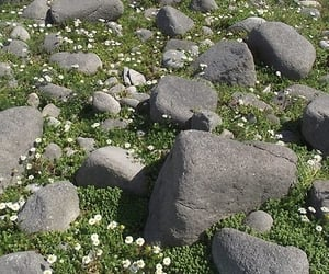 aesthetic, rock, and grass image