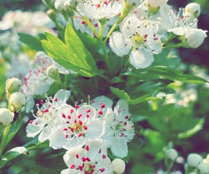 daydream, flora, and garden image