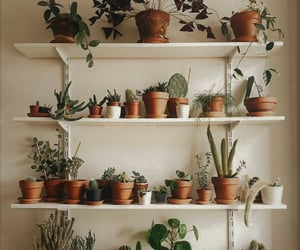 cactus, home, and plants image