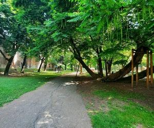 garden, Sunday, and lodi image