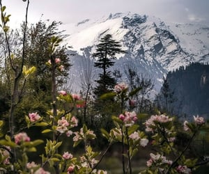 flowers, landscape, and mountain image