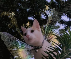 cat, cats, and Fairies image