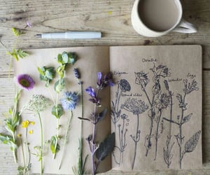 flowers and drawing image
