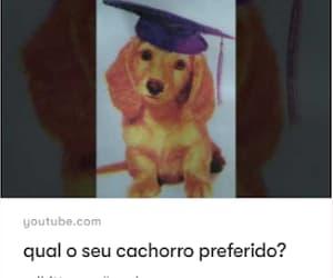 Animais, youtube, and cachorro image