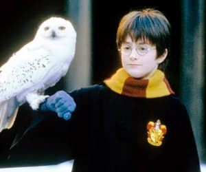 harry potter and owl image
