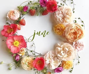 flowers, june, and spring image