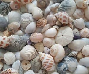 beige, indigo, and shell image