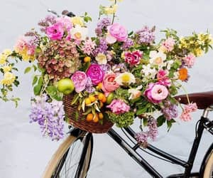 bike, flowers, and spring image