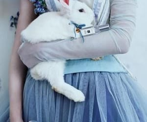 alice in wonderland, enchanted, and fairy tales image