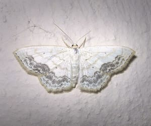 butterfly, white, and moth image