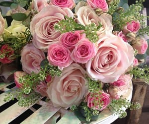 roses image