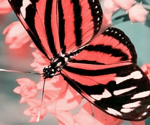 butterfly, wallpaper, and girl image