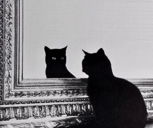 cat, mirror, and aesthetic image