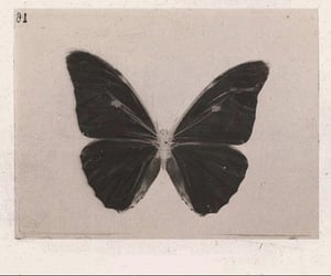 butterfly, black, and aesthetic image