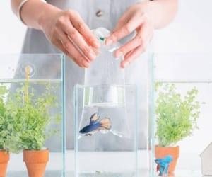 aquarium, fish, and set up image