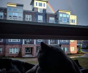 animals, cats, and raindrops image