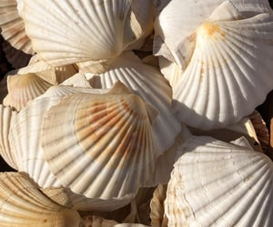 ocean, seashells, and summer image