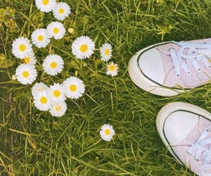 aesthetic, artsy, and daisies image