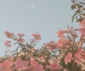 flowers, pink, and moon image