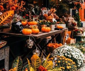 autumn, calm, and fall image