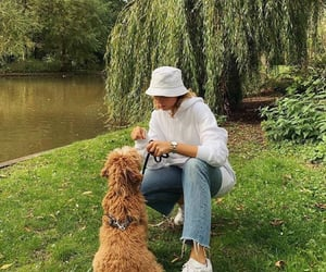 amsterdam, animal, and dog image