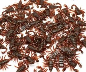 scorpio and scorpion image