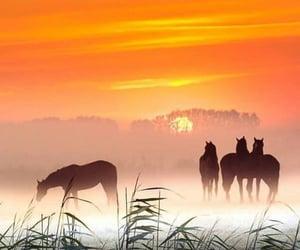 horses and sunset image