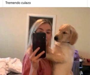 dog, meme, and perro image