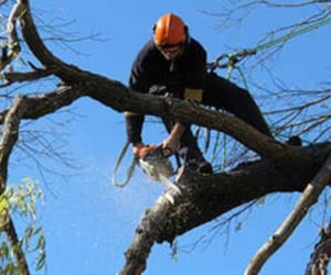 tree removal, land clearing, and stump grinding image
