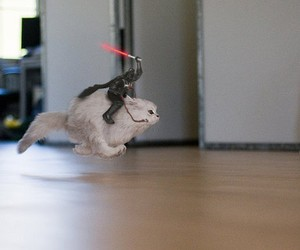 cat, funny, and darth vader image