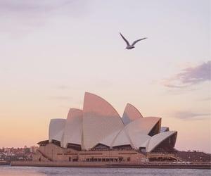 animals, australia, and travel image