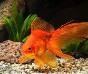 aquarium, fish, and live image