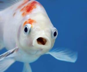 food, goldfish, and oxygen image
