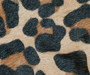 animal, background, and leopard image