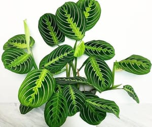 indoor plants, plants, and house plants image