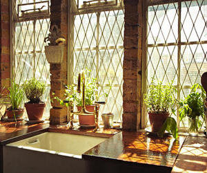 kitchen, plants, and Sunny image