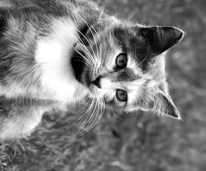 animal, lockscreen, and cat image