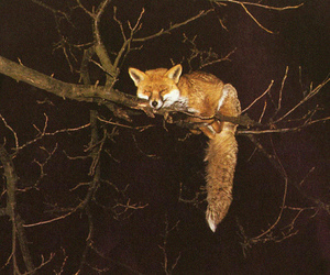 fox, tree, and animal image