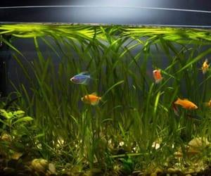 review, aquarium, and pump image