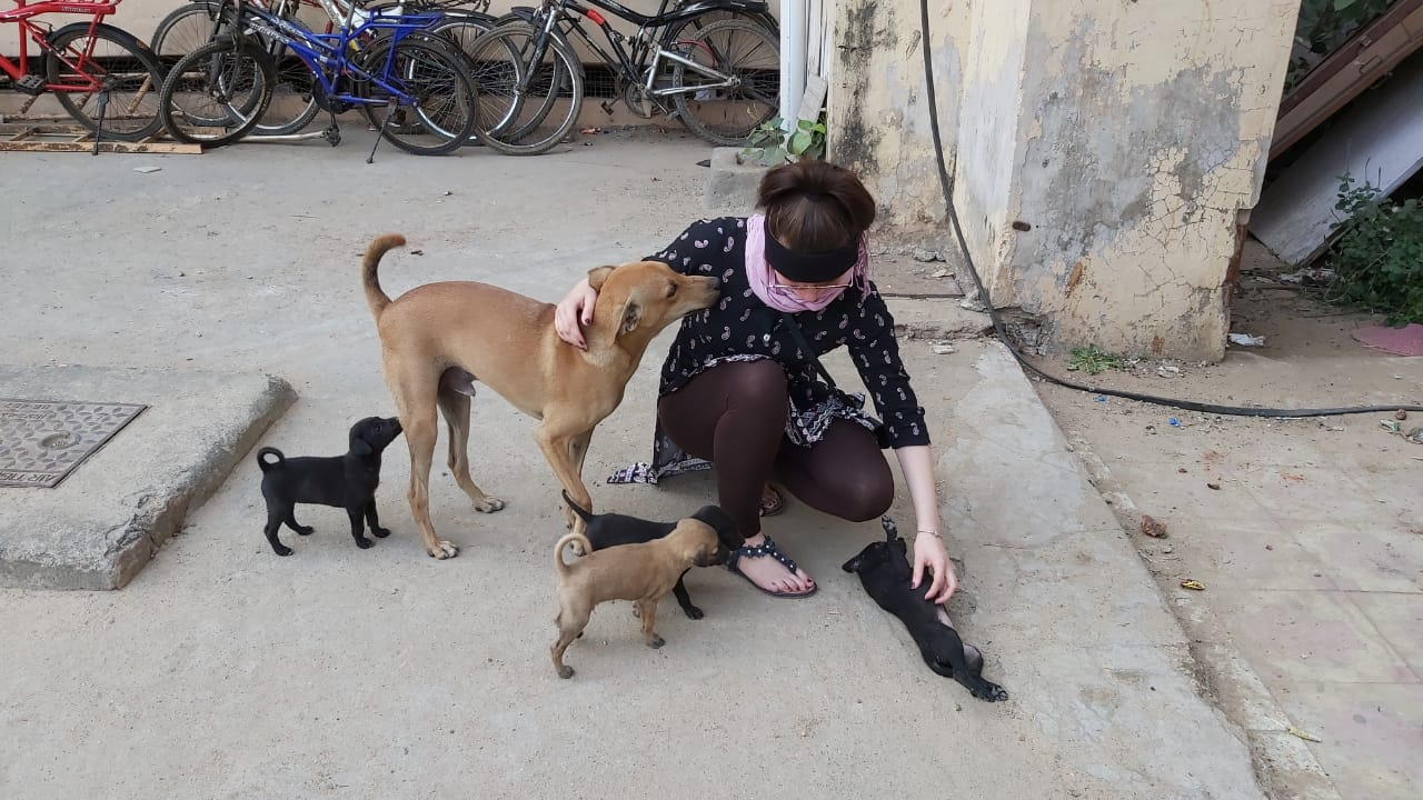 article, dogs, and india image