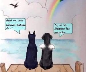 dog, perrito, and perro image